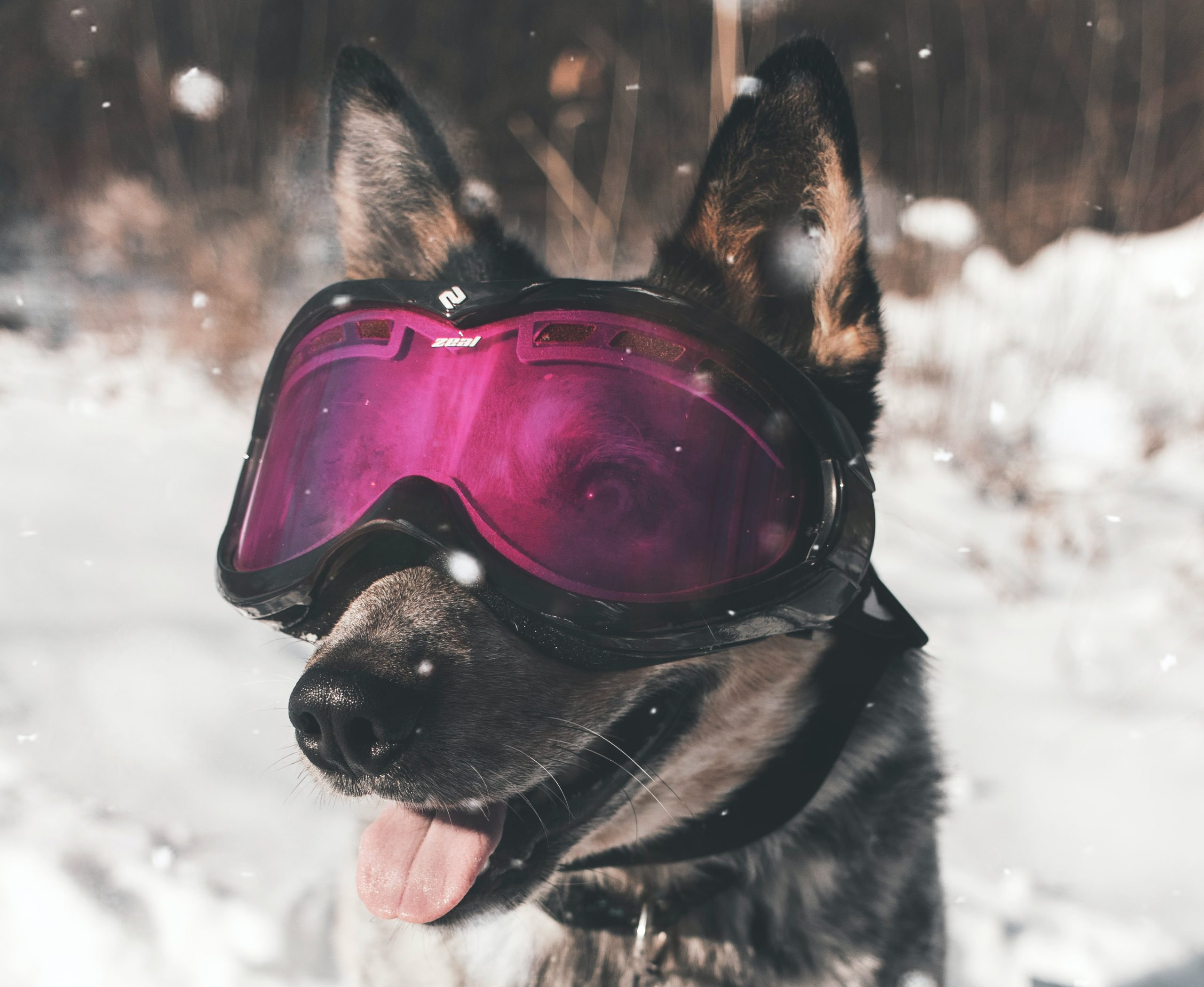 best ski goggles for all conditions